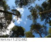 Купить «Небо в сосновом бору», фото № 1212682, снято 25 октября 2008 г. (c) Александр Быков / Фотобанк Лори