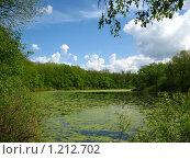 Лесное озеро. Стоковое фото, фотограф Александр Быков / Фотобанк Лори