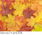Купить «Фон с осенними листьями», фото № 1213374, снято 12 октября 2008 г. (c) Александр Кузовлев / Фотобанк Лори