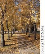 Осенняя березовая аллея. Стоковое фото, фотограф Екатерина Петрова / Фотобанк Лори