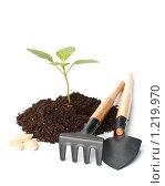 Купить «Молодой росток и садовый инструмент на белом фоне. Выращивание овощей.», фото № 1219970, снято 24 марта 2009 г. (c) Мельников Дмитрий / Фотобанк Лори