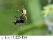 Купить «Паук и муха», фото № 1220154, снято 7 сентября 2009 г. (c) Иванов Аркадий Николаевич / Фотобанк Лори