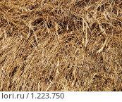 Сухое сено. Стоковое фото, фотограф Ваганова Марина / Фотобанк Лори