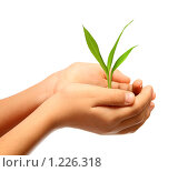 Зеленый росток в детских руках. Стоковое фото, фотограф Михаил Коханчиков / Фотобанк Лори