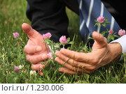 Купить «Мужские руки и цветы клевера», фото № 1230006, снято 12 июня 2009 г. (c) Losevsky Pavel / Фотобанк Лори