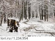 Пень возле парковой дорожки под первым снегом. Терлецкий лесопарк, Москва. Стоковое фото, фотограф Михаил Пименов / Фотобанк Лори