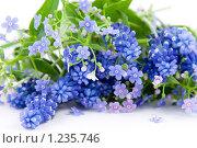 Купить «Букет весенних цветов», фото № 1235746, снято 9 мая 2009 г. (c) Елена Блохина / Фотобанк Лори