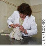 Купить «Осмотр зубов у мальтийской болонки ветеринаром», фото № 1236690, снято 8 июля 2009 г. (c) Галина Бурцева / Фотобанк Лори