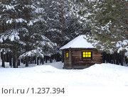Купить «Старая занесенная снегом избушка в сосновом бору», фото № 1237394, снято 28 марта 2009 г. (c) Александр Подшивалов / Фотобанк Лори