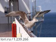 Купить «Буревестник балансирует», фото № 1239266, снято 12 августа 2009 г. (c) Маргарита Герм / Фотобанк Лори