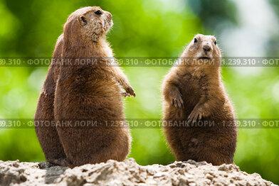Купить «Три суслика», фото № 1239310, снято 25 июля 2009 г. (c) Петр Кириллов / Фотобанк Лори