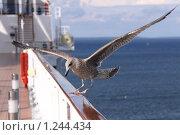 Купить «Точная посадка», фото № 1244434, снято 12 августа 2009 г. (c) Маргарита Герм / Фотобанк Лори