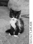Купить «Беспризорник, черно-белое», фото № 1245434, снято 3 июля 2009 г. (c) Анастасия Некрасова / Фотобанк Лори