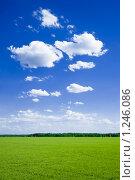 Купить «Зеленое поле и голубое небо с облаками», фото № 1246086, снято 7 июня 2009 г. (c) Виталий Романович / Фотобанк Лори