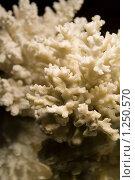 Кораллы. Стоковое фото, фотограф Иван Веселов / Фотобанк Лори