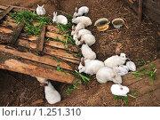 Разведение кроликов. Стоковое фото, фотограф Ольга Визави / Фотобанк Лори