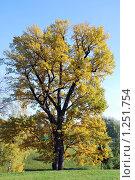 Осень. Стоковое фото, фотограф Оксана Шагова / Фотобанк Лори