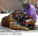Тигр и человек (2009 год). Редакционное фото, фотограф Иванка Иванка / Фотобанк Лори