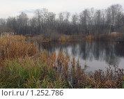 Маленькое озеро с камышами в пасмурную осеннюю погоду. Стоковое фото, фотограф Дамир Фахретдинов / Фотобанк Лори