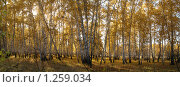 Осень в лесу. Стоковое фото, фотограф Евгения Никифорова / Фотобанк Лори