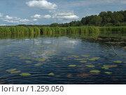 Озеро Ильмень. Стоковое фото, фотограф Олег Абрамов / Фотобанк Лори
