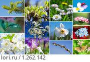Купить «Весенний коллаж», фото № 1262142, снято 16 сентября 2007 г. (c) Алексей Ухов / Фотобанк Лори