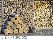 Купить «Поленница дров, сложенная штабелем», фото № 1262502, снято 30 апреля 2006 г. (c) Юрий Кобзев / Фотобанк Лори