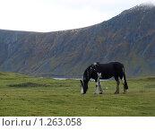 Пегая лошадь (2009 год). Стоковое фото, фотограф Зоя Степанова / Фотобанк Лори