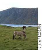 Лошадь породы Норвежский фьорд. Лошади (2009 год). Стоковое фото, фотограф Зоя Степанова / Фотобанк Лори