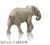 Слон. Стоковое фото, фотограф Виктор Застольский / Фотобанк Лори