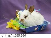 Купить «Пасхальный заяц», фото № 1265566, снято 21 апреля 2009 г. (c) Галина Лукьяненко / Фотобанк Лори