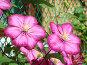 Большие цветы, фото № 1267426, снято 1 октября 2008 г. (c) Елена Мусатова / Фотобанк Лори