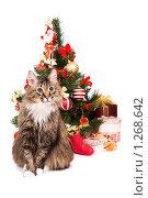 Купить «Пушистый кот сидит на фоне новогодней елки. Год Кота.», фото № 1268642, снято 5 декабря 2009 г. (c) Ирина Карлова / Фотобанк Лори