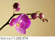 Купить «Цветение орхидеи», фото № 1268974, снято 20 сентября 2019 г. (c) Sergey Toronto / Фотобанк Лори