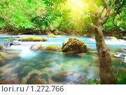 Река в тропиках. Стоковое фото, фотограф Ольга Хорошунова / Фотобанк Лори