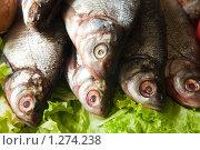 Свежая речная рыба. Стоковое фото, фотограф Яков Филимонов / Фотобанк Лори