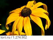 Купить «Цветок», фото № 1274902, снято 6 октября 2006 г. (c) Егор Никифоров / Фотобанк Лори