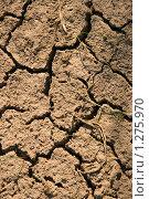 Купить «Растрескавшаяся земля», фото № 1275970, снято 2 мая 2009 г. (c) Щеголева Ольга / Фотобанк Лори