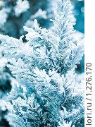 Купить «Еловая ветка в снегу», фото № 1276170, снято 4 декабря 2009 г. (c) Андрей Иванов / Фотобанк Лори