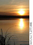 Купить «Закат на озере и маленькое насекомое на травинке», фото № 1277446, снято 30 июня 2009 г. (c) Валуйкин Сергей / Фотобанк Лори