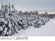 Купить «Зимний вечерний пейзаж», фото № 1284070, снято 15 ноября 2007 г. (c) Икан Леонид / Фотобанк Лори