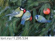С Новым годом. Стоковое фото, фотограф Сергей Кудряков / Фотобанк Лори