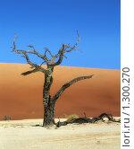 Купить «Засохшее дерево в пустыне», фото № 1300270, снято 23 мая 2018 г. (c) Leksele / Фотобанк Лори