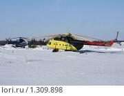 Купить «Вертолёты полярной авиации на посадочной площадке», фото № 1309898, снято 21 апреля 2009 г. (c) Анатолий Ефимов / Фотобанк Лори