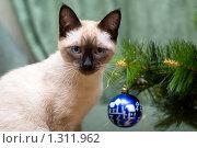 Купить «Кошка у новогодней елки. Фокус на кошке», фото № 1311962, снято 20 декабря 2009 г. (c) Недзельская Татьяна / Фотобанк Лори