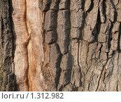 Кора дерева. Стоковое фото, фотограф Алексей Дектерев / Фотобанк Лори