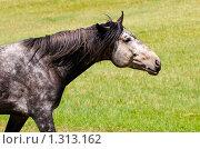 Портрет коня. Стоковое фото, фотограф Храпова Марина / Фотобанк Лори