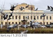 Купить «Стая голубей взлетает на фоне университета в Орле», фото № 1313910, снято 3 ноября 2009 г. (c) Ромашка / Фотобанк Лори