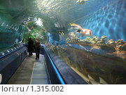 Купить «Санкт-Петербург. Океанариум», фото № 1315002, снято 26 сентября 2009 г. (c) Александр Секретарев / Фотобанк Лори