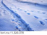 Купить «Тропинка и отдельные следы на снегу. Кто-то идет своим путем, хотя рядом протоптанная дорога», фото № 1320378, снято 23 декабря 2009 г. (c) Александр Куличенко / Фотобанк Лори